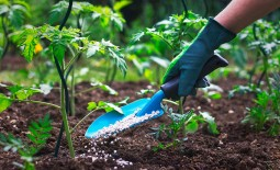 Нюансы подкормки помидоров в открытом грунте: виды удобрений, технология внесения