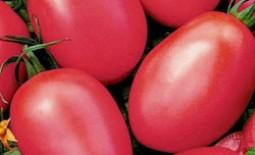Выращивание томатов Новичок розовый