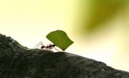 Как избавиться от муравьев на яблоне: эффективные средства борьбы с насекомыми