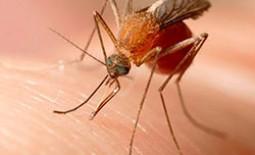 Укусы различных насекомых: симптомы, народные способы лечения
