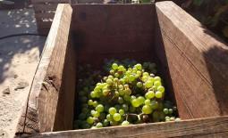 Пресс для винограда: сборка простой конструкции своими руками