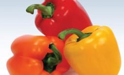 Лучшие из сортов и гибридов сладкого болгарского перца, пригодных для выращивания в Подмосковье