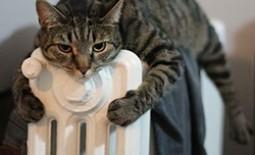 Холодно? ТОП-5 проверенных способов сохранить тепло в квартире