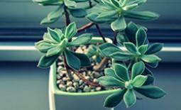 Как приготовить подкормку для домашних растений из подручных ингредиентов