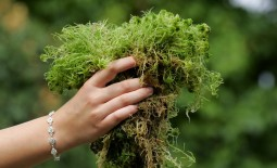 Чем полезен мох сфагнум в саду и цветнике. Как его заготовлять и использовать