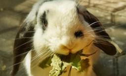 Как приготовить комбикорм своими руками: состав для кроликов