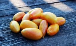 Как вырастить Стыдливый румянец: подробное описание коллекционного томата