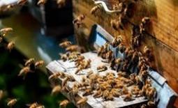 Как обустроить теплицу для уютной и безопасной зимовки пчел