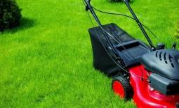 5 способов сделать газон еще зеленее