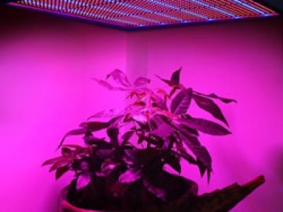 Светодиодная фитолампа для выращивания растений – правильно изготовить своими руками