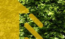 Живая изгородь: 12 живых изгородей для тенистых участков