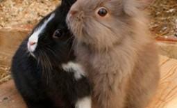 Разведение кроликов: как определить пол животных
