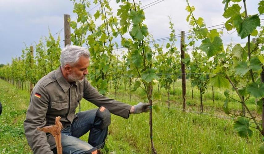 Опоры для винограда