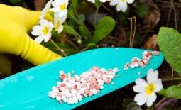 6 ошибок при внесении удобрений, которые совершают большинство садоводов