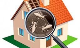 Разновидности и описание домашних насекомых