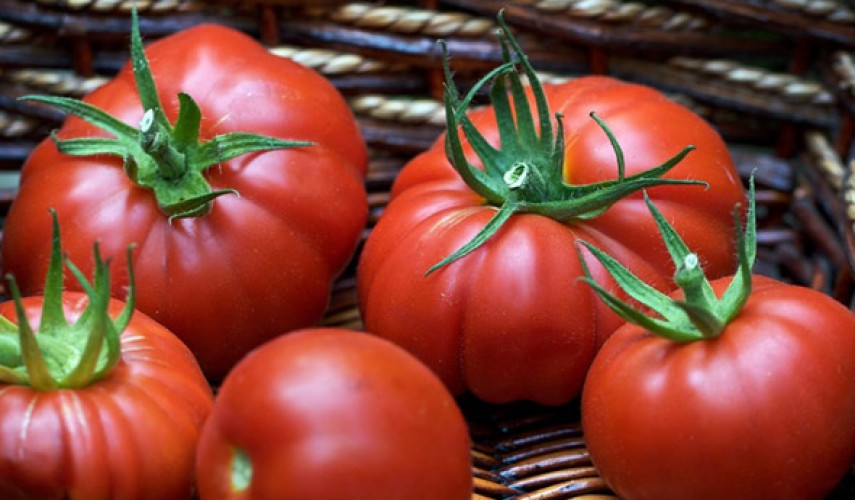 Сорт томатов Пузата хата