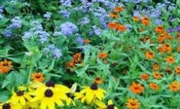 Декоративная клумба непрерывного цветения: как обустроить своими руками