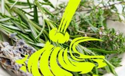 7 трав, которые помогут в уборке дома