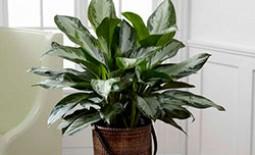 Востребованные и доступные виды тенелюбивых домашних растений