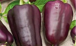 Перец Клякса: описание сорта, особенности выращивания