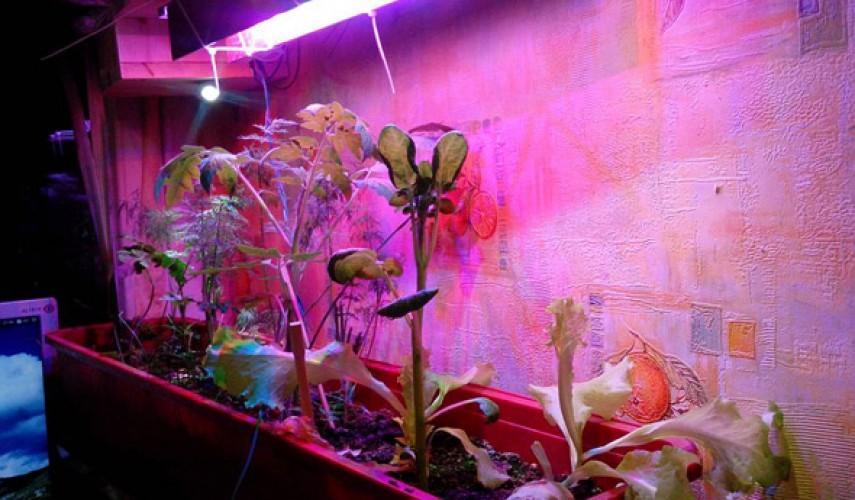 Лампа для досвечивания растений