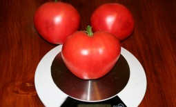 Сердцеед – все о диетическом томате. Как вырастить неприхотливую культуру: описание и рекомендации