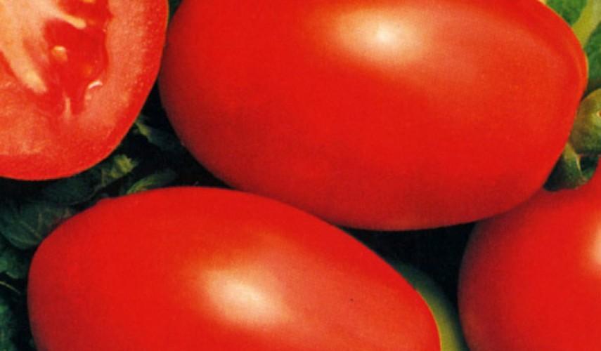 Сорт томатов Рио-Гранде