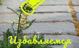 7 необычных способов избавиться от сорняков