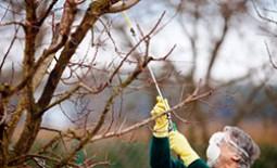 Правила и особенности осенней обработки деревьев от болезней и вредителей