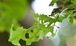 Если на яблоне завелись гусеницы, как побороть их с помощью препаратов или народных средств