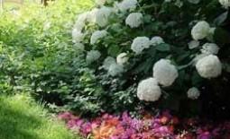 Тенелюбивые однолетние и многолетние растения для вашего сада: описание, фото