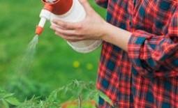 Борная кислота для помидоров: польза, вред и правила опрыскивания