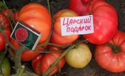 Царский подарок — высокоурожайный томат: характеристики и описание сорта