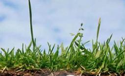 Кислотность грунта на даче. Какая почва подходит для посадки разных культур