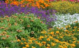 20 лучших многолетних растений для сада