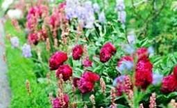 Описание однолетних и многолетних цветов, пригодных для создания бордюра