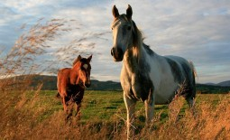 Гид по мастям лошадей: перечень названий, описание и фото