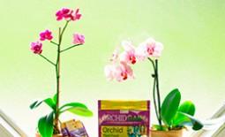 Как подбирать и применять удобрение для экзотических любимиц – орхидей