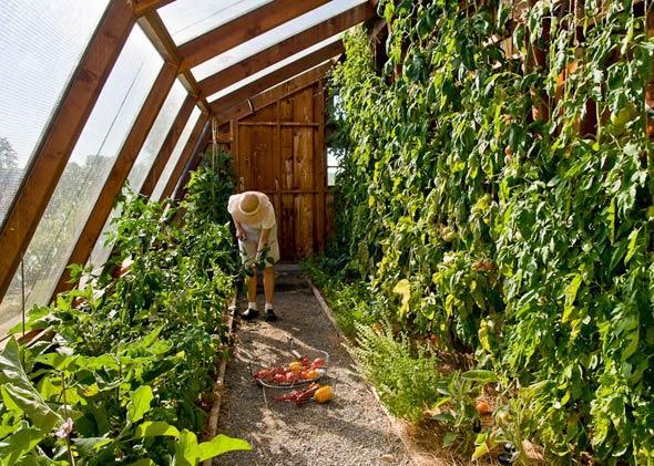 как обрезать кусты помидоров