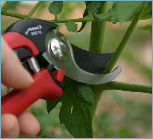 зачем удалять пасынки на помидорах