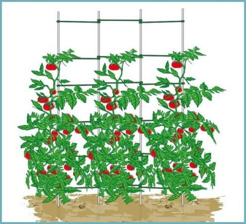 подвязывание томатов к опоре