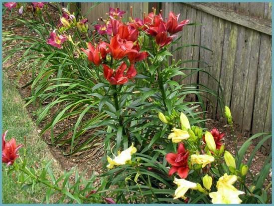 Как выбрать место для посадки лилий