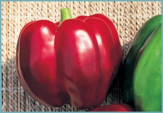 какой сорт перца подойдет для выращивания в теплице