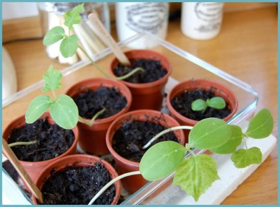 микроклимат для выращивания огурцов