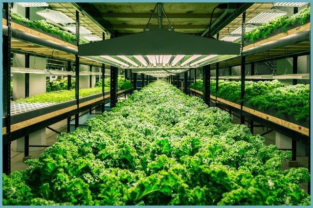 как оборудовать теплицу для выращивания зелени