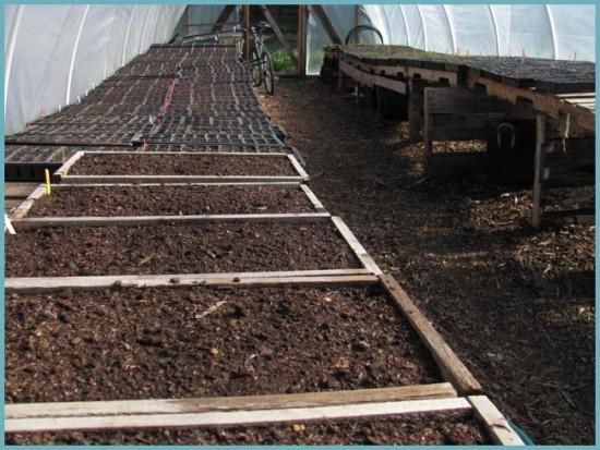 как правильно сеять зелень в теплице