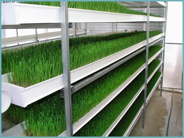 как сделать стеллажи для выращивания зелени