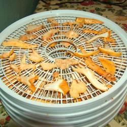 заготовка лисичек на зиму