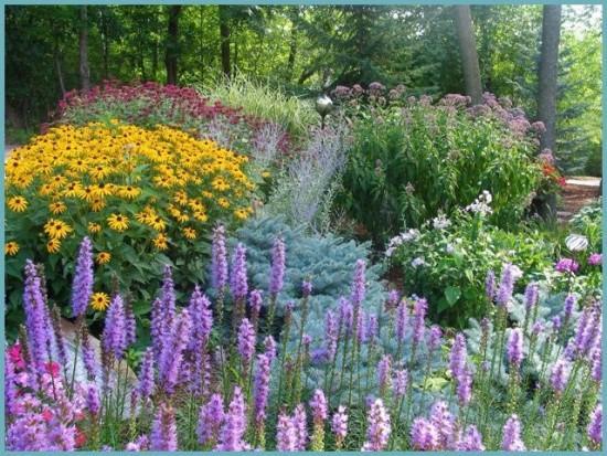 с каким растением посадить лиатрис