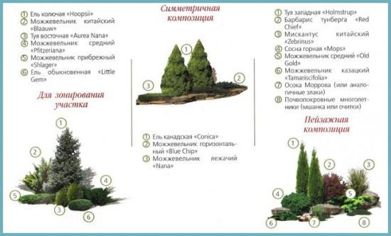 хвойные растения для альпинария